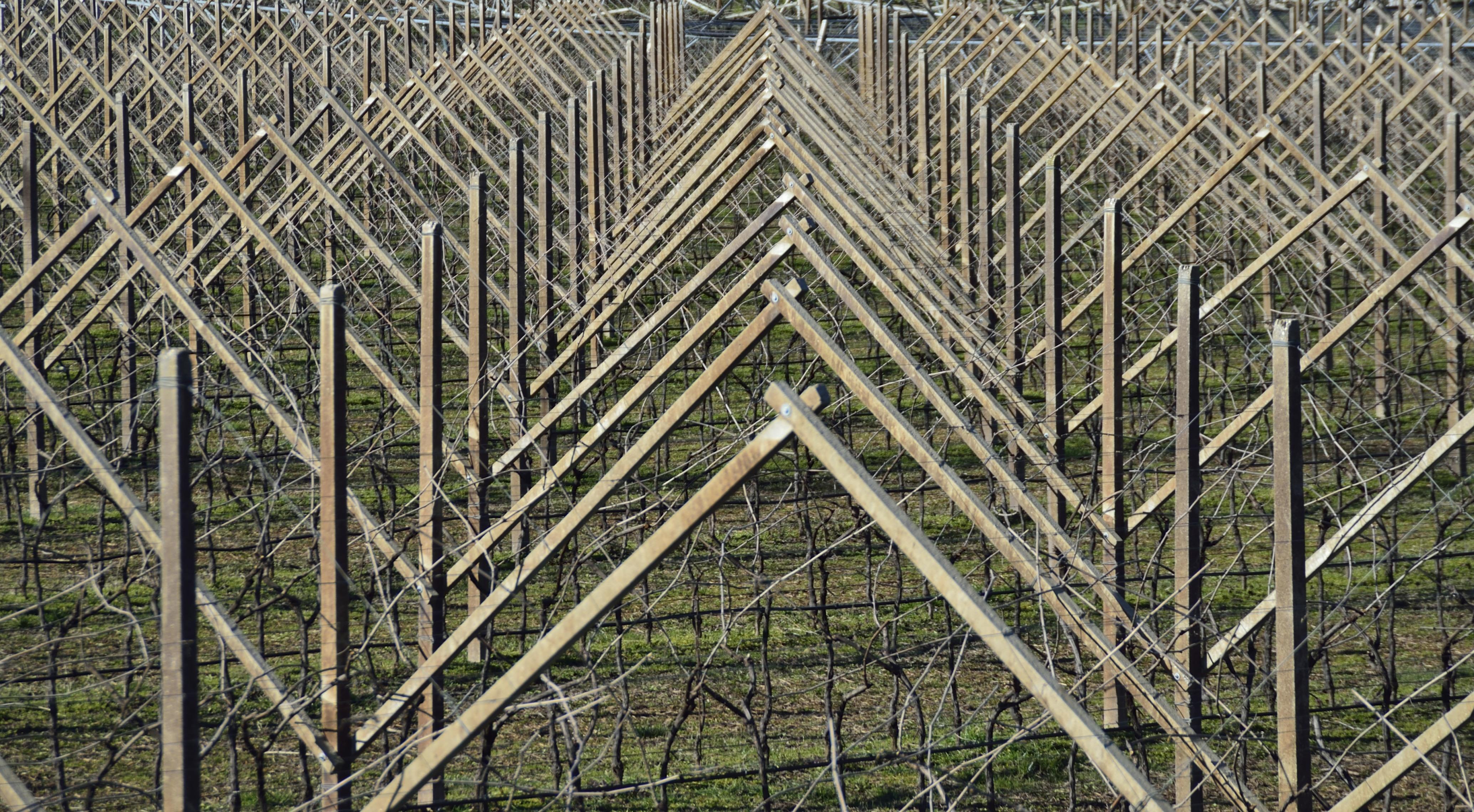 Geometrie in Agricoltura