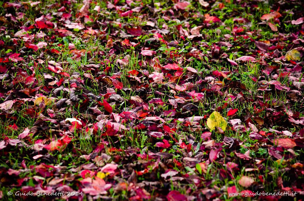 E venne l'autunno…