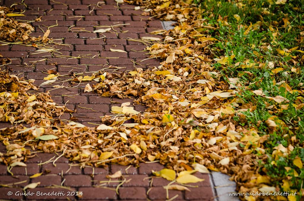 Con l'autunno la natura riconquista i propri spazi