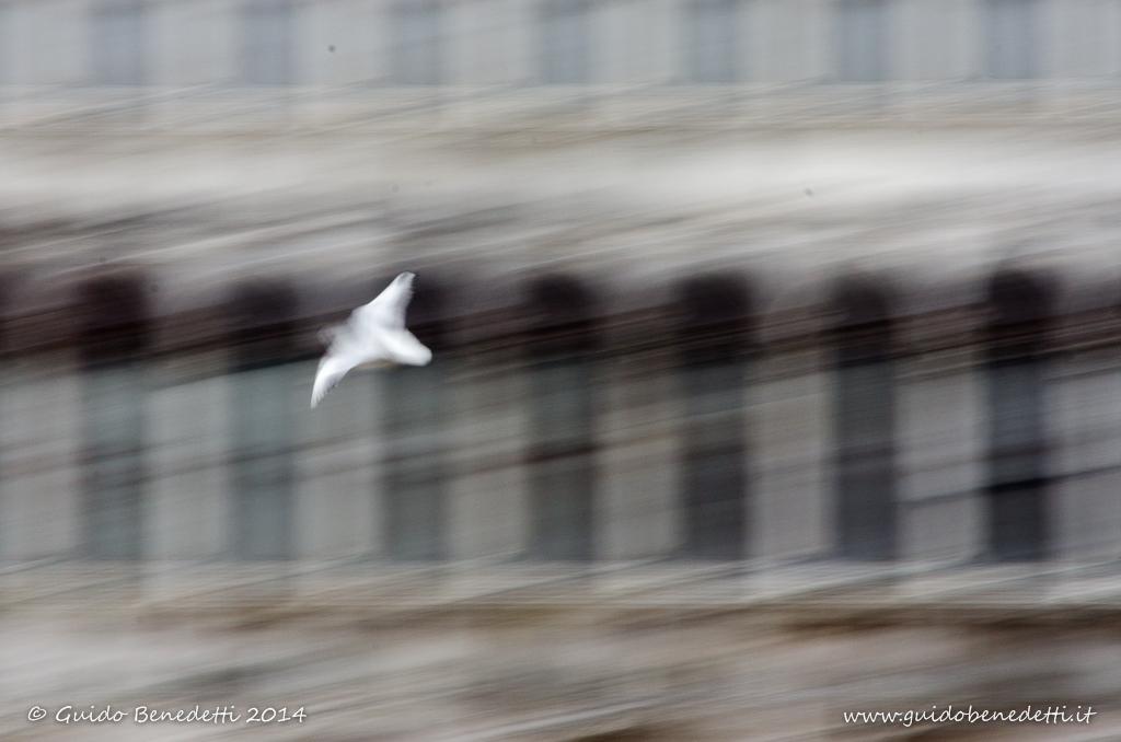 In volo…
