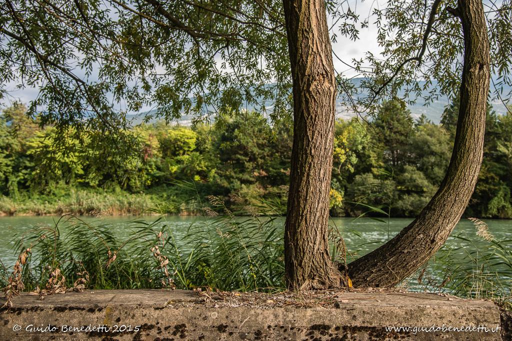 Alberi sulla riva del fiume Adige a Mori Stazione