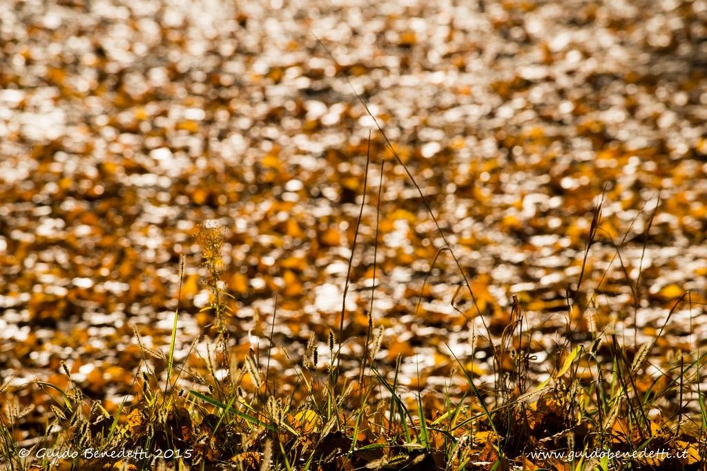 Mare d'autunno