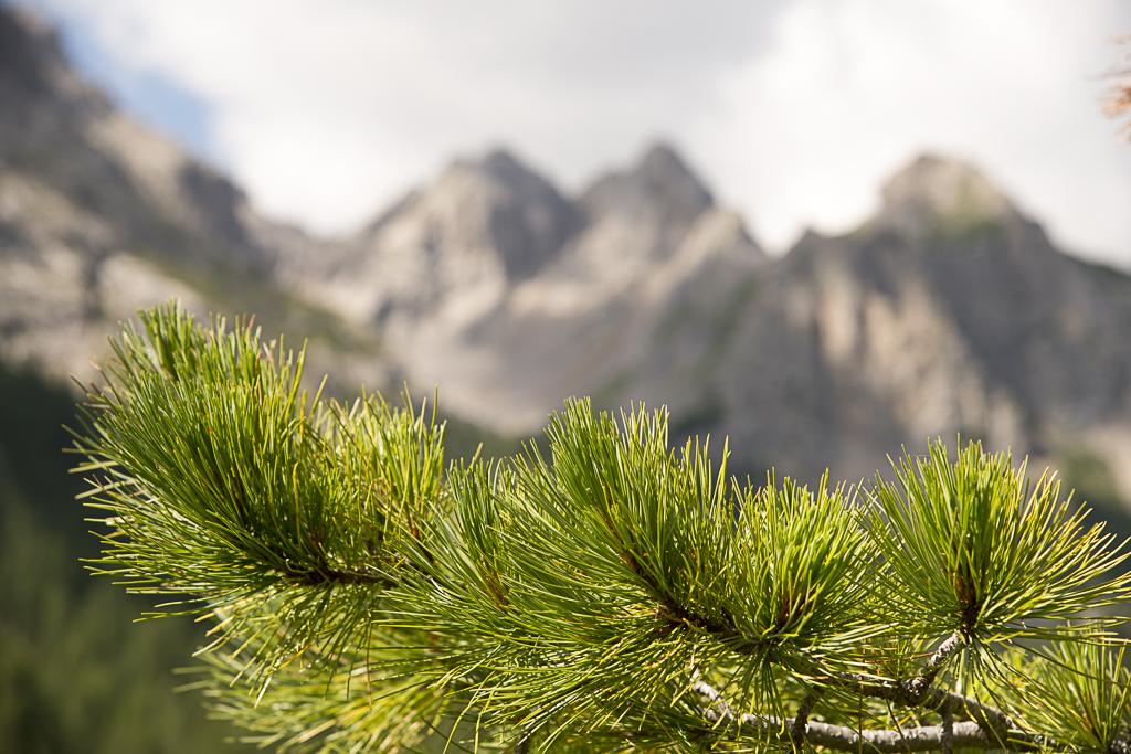 Imitazione naturale in Val San Nicolò